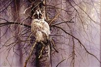 Vogel, Waldohreule, Eule, Malerei