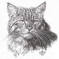 Katze, Katzenportrait, Zeichnungen, Portrait