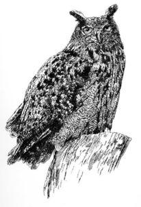 Eule, Vogel, Uhu, Zeichnungen