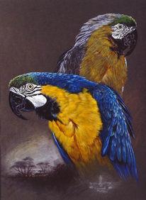 Vogel, Gelbbrustara, Malerei