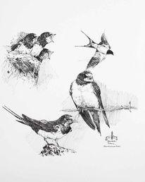 Vogel, Rauchschwalben, Schwalbe, Zeichnungen