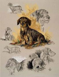 Hund, Rauhaardackel, Dackel, Malerei