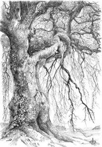 Vergangenheit, Knorrig, Baum, Alter
