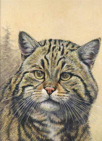 Katze, Malerei, Figural, Wildkatze