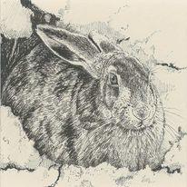 Feldhase, Hase, Zeichnungen