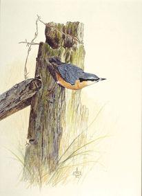 Kleiber, Vogel, Malerei