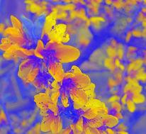 Digital, Digitale kunst, Frühling, Farben