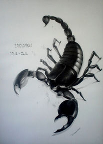 Zeichnung, Zeichnungen, Skorpion, Sternzeichen