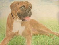 Portrait, Zeichnung, Zeichnungen, Boxer
