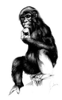 Zeichnung, Zeichnungen, Affe