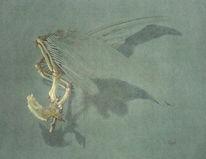 Stillleben, Taube, Zeichnung, Flügel