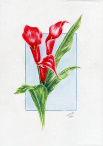 Zeichnung, Stillleben, Zeichnungen, Callas