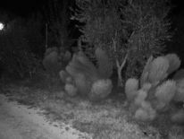 Fotografie, Schwarzweiß, Pflanzen, Nacht