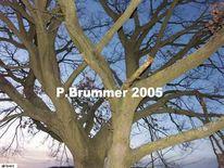 Abend, Fotografie, Baum, Landschaft