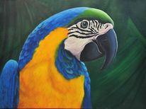 Tiere, Vogel, Papagei, Malerei