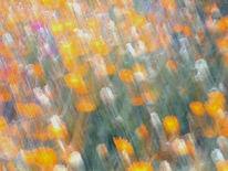 Lichtmalerei, Blumenbeet, Wischeffekt, Ringelblumen