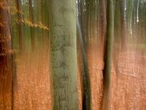Lichtmalerei, Lightpainting, Wald, Verwischen