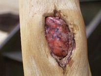 Kunsthandwerk, Naturholz, Stuhl, Holz