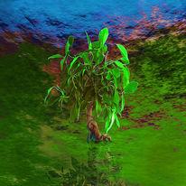 Wasser, Grün, Bonsai, Blau
