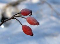Samen, Landschaft, Fotografie, Winter