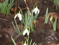 Frühling, Blumen, Fotografie, Landschaft