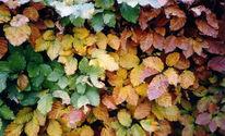 Jahreszeiten, Landschaft, Laub, Fotografie