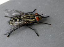 Wetter, Fliege, Landschaft, Insekten