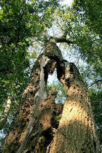 Baum, Fotografie, Durchblick, Spalt