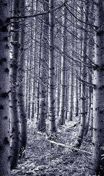 Wald, Baum, Fotografie, Fichte