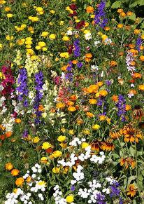 Blumen, Gras, Digitale kunst,