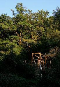 Fotografie, Wald, Brücke, Wahl