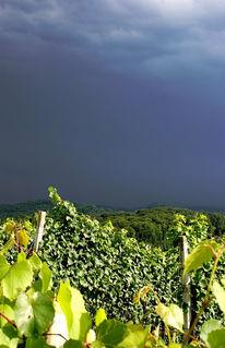 Weinberg, Gewitter, Steiermark, Sonne