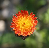 Fotografie, Stillleben, Blumen, Sonne