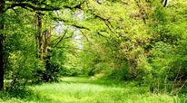 Grun, Landschaft, Wald, Lichtung