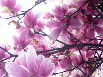 Baum, Rosa, Fotografie, Blumen