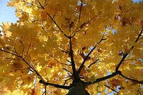 Baum, Fotografie, Stillleben, Gelb