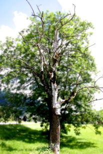 Fotografie, Leben, Baum, Tod