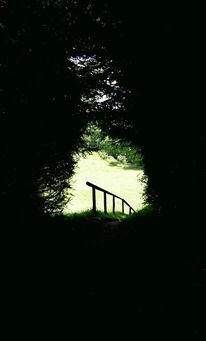 Weg, Fotografie, Wald, Landschaft