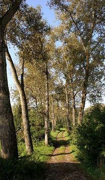 Fotografie, Spaziergang, Weg, Baum