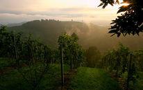 Weinberg, Hügel, Nebel, Fotografie