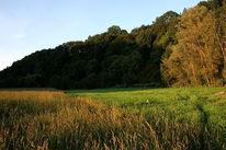 Wald, Wiese, Herbst, Landschaft