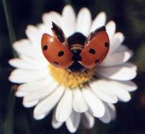 Tiere, Marinie, Insekten, Fotografie