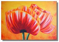 Rose, Malerei, Tulpen, Mohn
