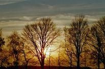 Sonnenuntergang, Baum, Abend, Landschaft