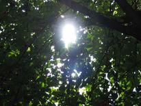 Blätter, Fotografie, Sonne, Strauch