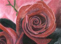 Rot, Stillleben, Zeichnung, Rose
