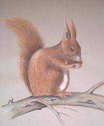 Zeichnung, Eichhörnchen, Zeichnungen