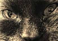 Seele, Augen, Katze, Tiere