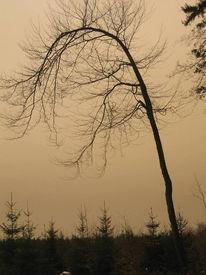Landschaft, Fotografie, Schwer