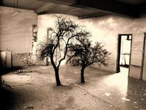 Marode, Baum, Zimmer, Digital